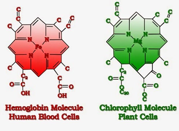 Molecular arrangement of Hemoglobin and Chlorophyll