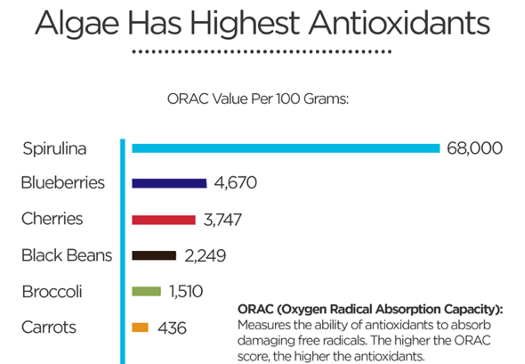 chart of algae and antioxidants