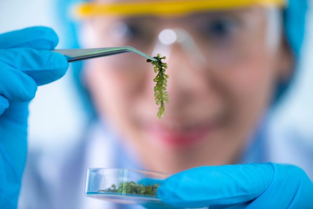 scientist holding algae