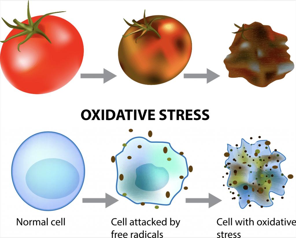 tomato going through oxidation process